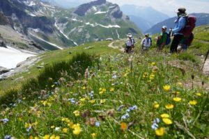 alpine Blumen entlang der Tour du Mont Blanc