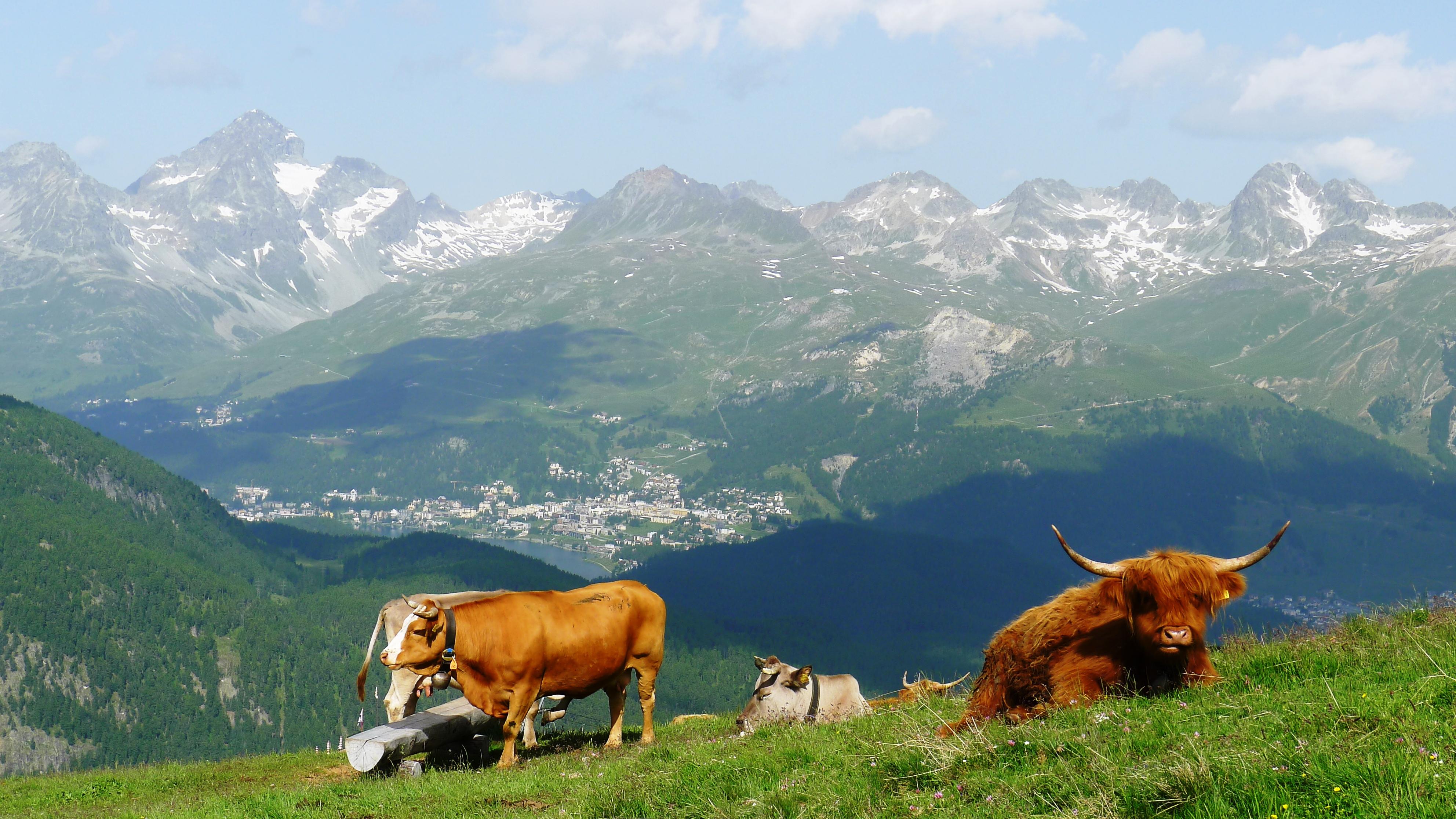 Hiking the Swiss Alps and Lake Como area, Engadin, St.Moritz