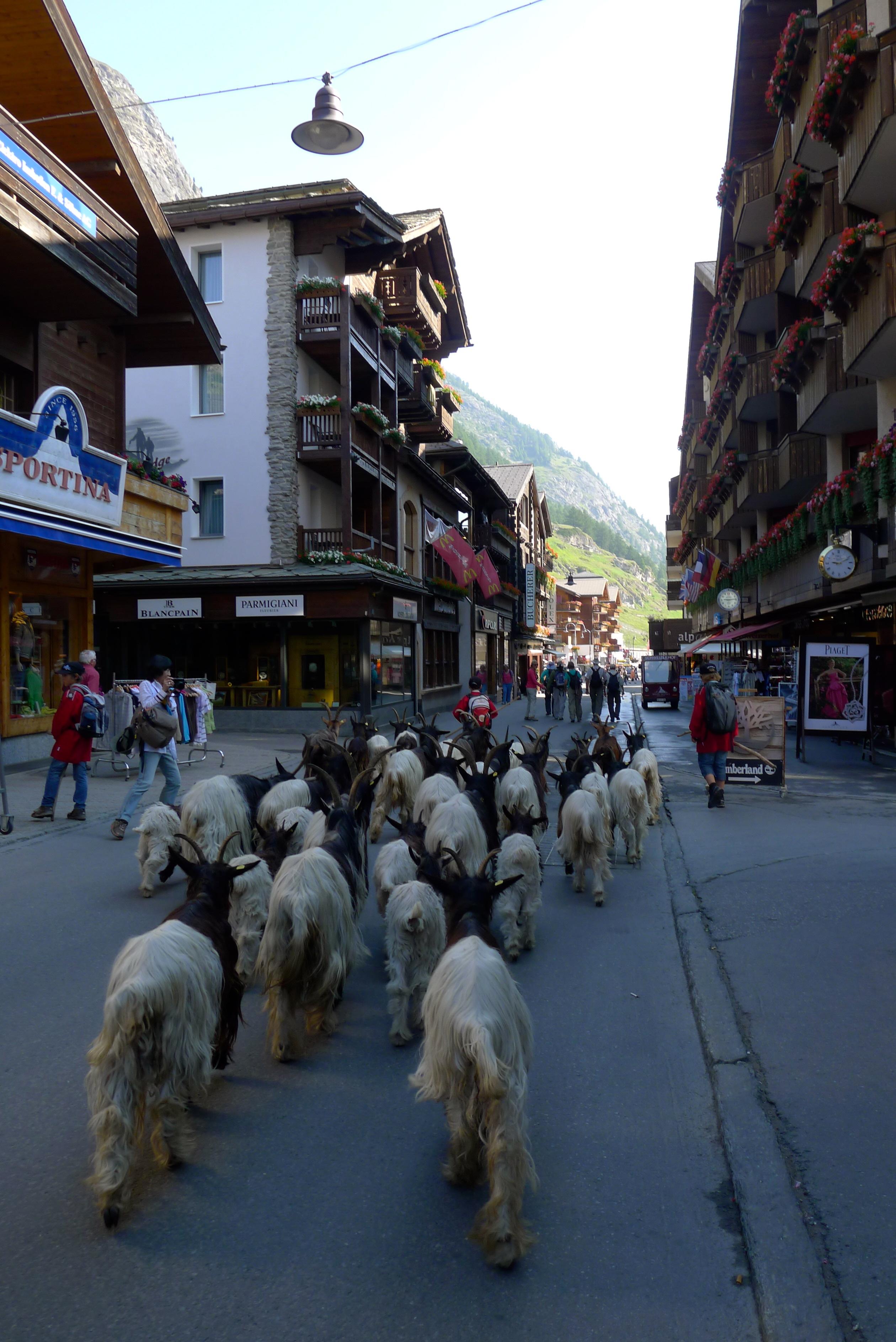 Swiss Alps hiking, the town of Zermatt