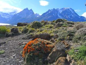 Hiking trip Patagonia, El Chalten Argentina