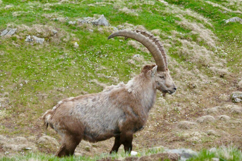 ibex-hidden-paradise-hike